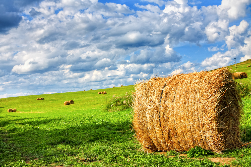 Happiness is…hay!