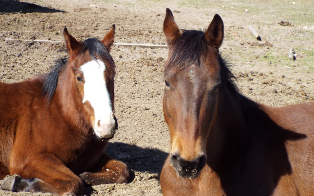 Hay For The Horses Editing Sale & How To Help