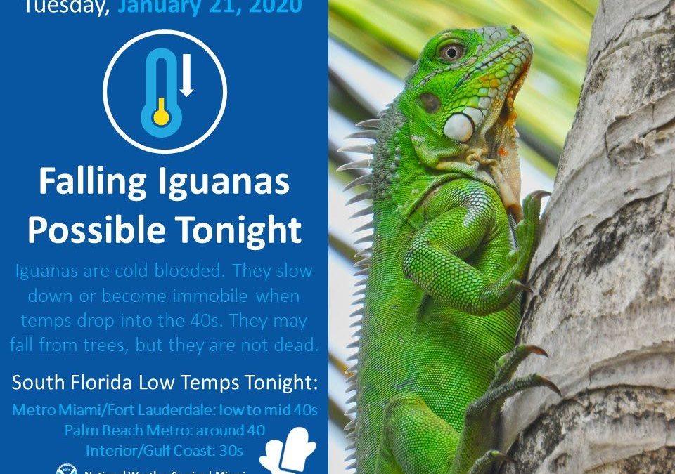 Falling Iguanas & Inspiring Photos (#ISWSG)